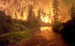 Fire at Montana's Bitterrot Valley