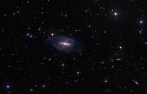 A rare polar ring galaxy in Ursa Major